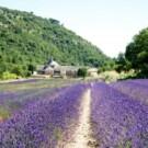 Hvorfor skulle jeg ikke nyde livet i Sydfrankrig